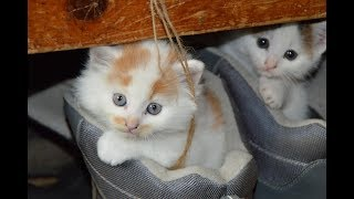 Beautiful Cat Wallpapers,Cats Images,Cat Pictures,Cats Photos WhatsApp Video