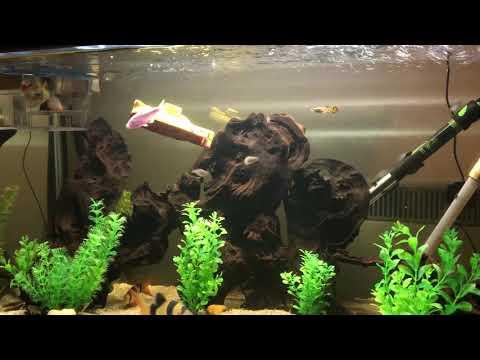 Mini submarine in tropical fish tank