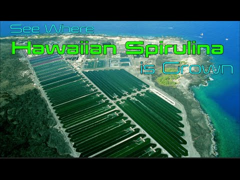 See Where Hawaiian Spirulina is Grown part 1