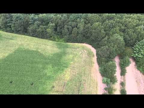 Marijuana plants spotted in corn field!