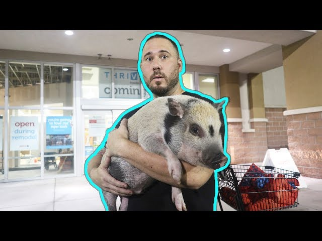 TAKING MY PET PIG TO THE STORE!