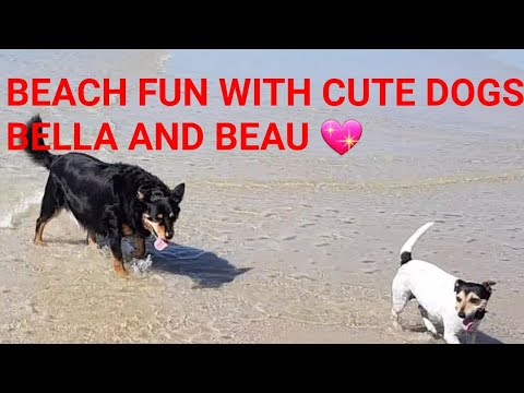 Beach fun day with cute dogs Bella and Beau 🏖💖