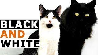 Black and White Beautiful World with Tuxedo Kitten Chuck Morris 2019