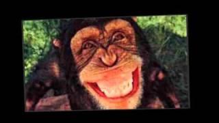 Rabito el rap del mono .mpg