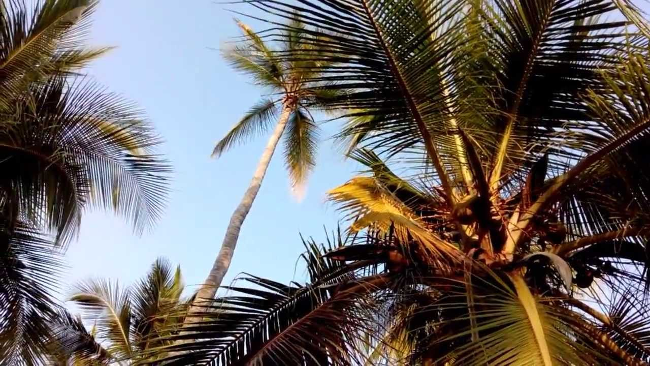 Beautiful Coconut Trees Scenery With Background Blue Sky