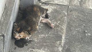 Котенок тихо умирал на улице, но все проходили мимо
