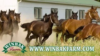 Winbak Farm 2016 Delaware Stallions