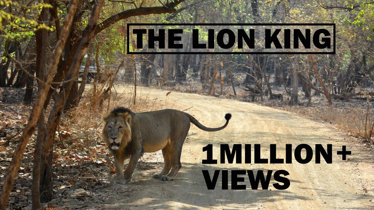 sasan gir lion