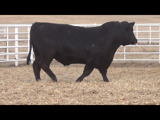 Express Ranches Lot 69