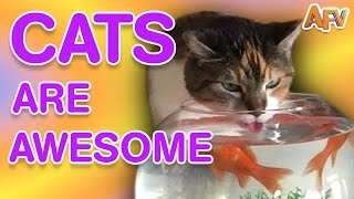 Cats Are Awesome | Best of AFV