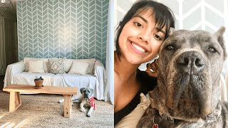 Cane Corso Top 5 Tips for a Clean Home with Big Dogs
