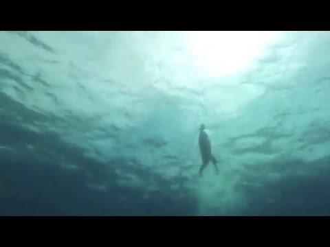 Ben Hooper begins swim across Atlantic Ocean