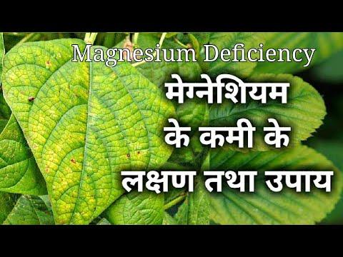 मेग्नीशियम के कमी के लक्षण तथा उपाय। Magnesium Deficiency In Plants.