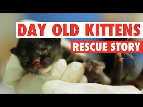 Three Abandoned One-Day-Old Kittens    A Rescue Story