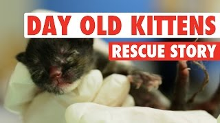 Three Abandoned One-Day-Old Kittens || A Rescue Story