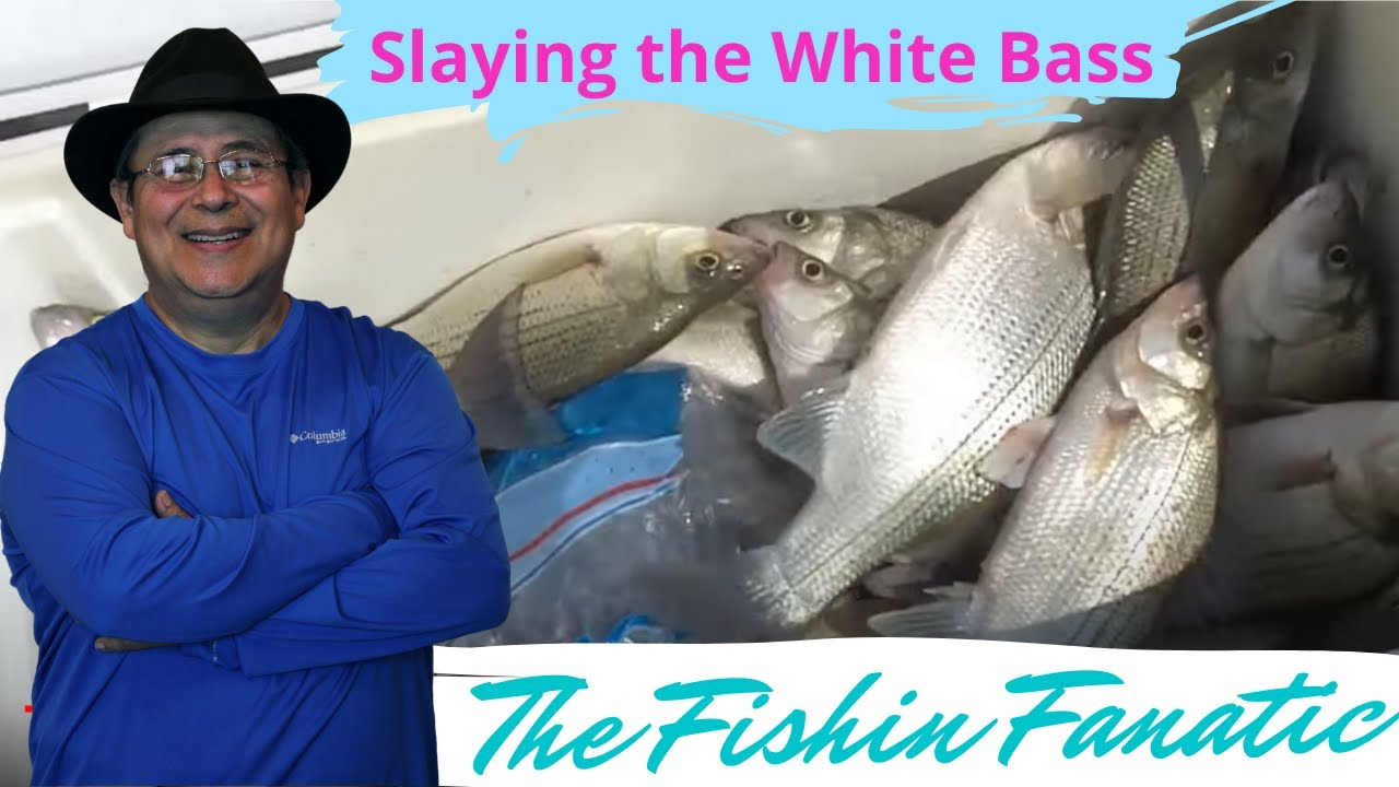 Slaying the white bass on lake livingston tx youtube for Lake livingston fishing report