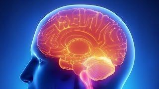 Le ventre est-il notre deuxième cerveau ?