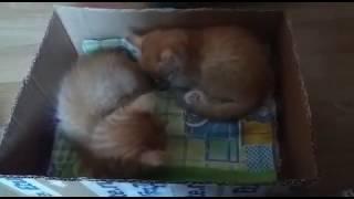 Мои любимые котята (баюшки)