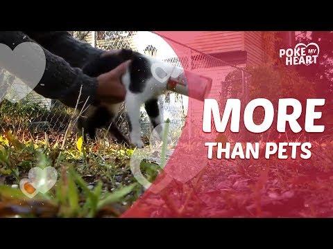 More Than Pets