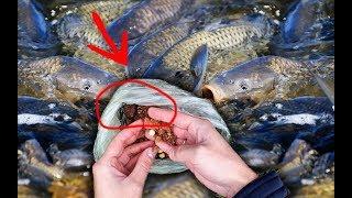 Как привлечь много рыбы Пенопласт и бойлы на рыбалке реакция рыбы подводная съемка