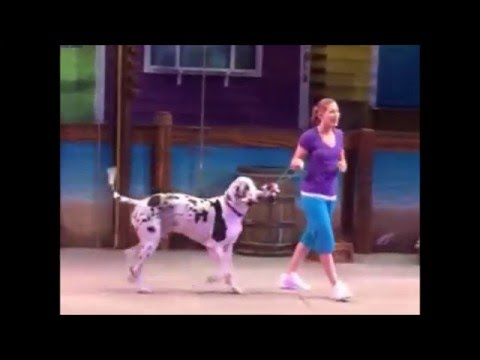Circus Show of Pet Animal Cat Dog with a Lady at SeaWorld Orlando and Marine Zoological Park
