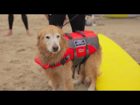 Surfing Dog Competition Recap - 2016 Purina® Pro Plan® Incredible Dog Challenge® Western Regionals