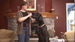Самая большая собака в мире скончалась