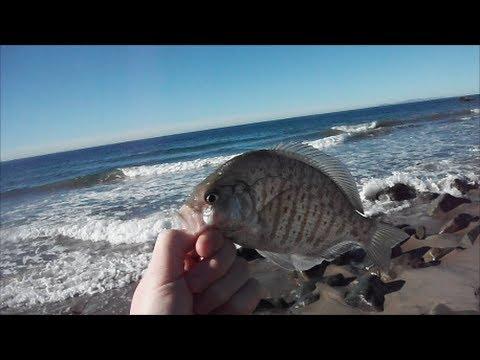 Malibu Surf Fishing