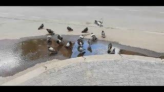 Güvercinlerin Banyo Keyfi - KAYSERİ