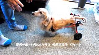 犬用車いすミニチュアダックスフント20171120 thumbnail