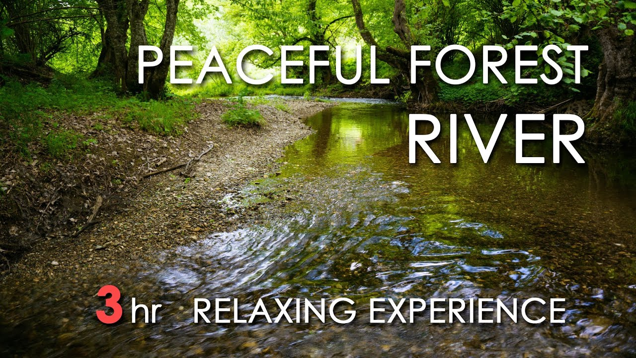 Tropical Island Beach Ambience Sound: Peaceful Forest River