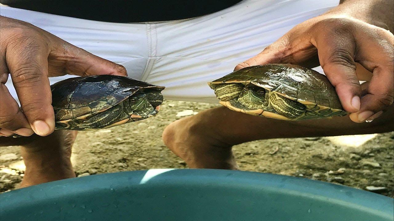 Cuidando tortugas en el criadero de peces youtube for Criadero de peces en casa