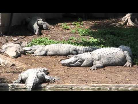 Hamat Gader - Hot Springs - Parrot Show - Aligator Park - Roman Antiquities