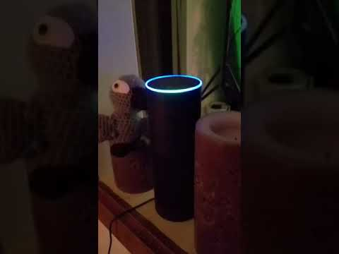 Mark - A parrot orders Amazon with Alexa when his owner is away
