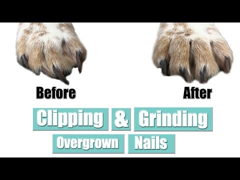Clipping & Grinding Overgrown Nails