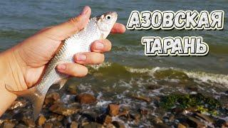 Рыбалка на Азовском море Ейск ловля с берега на спиннинг