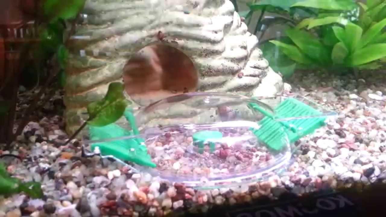 privates aquarium 120l schneckenplage teil3 youtube. Black Bedroom Furniture Sets. Home Design Ideas
