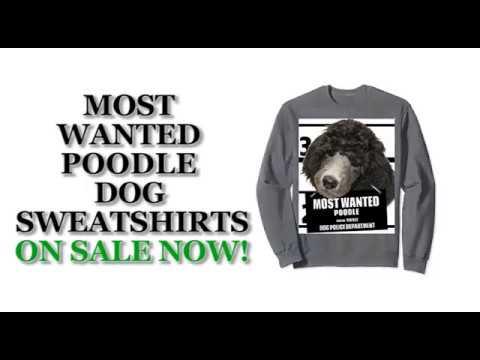 Most Wanted Poodle Cute Funny Dog Sweatshirts - Men's, Women's, Kid's - Black, Grey, Dark Heather
