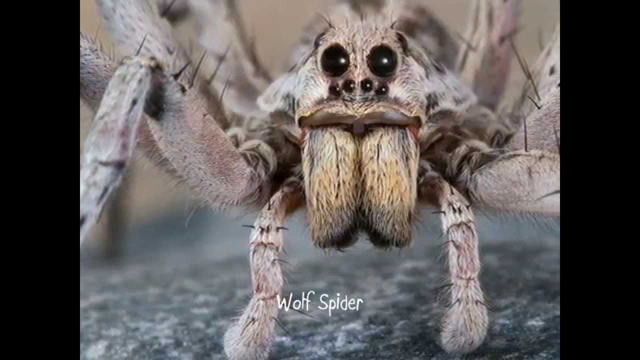 25 of the Scariest Animals in the World - YouTube