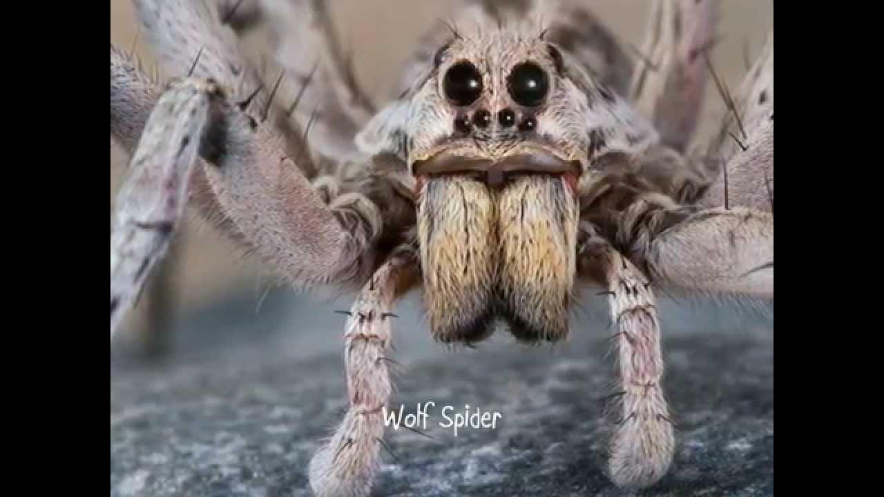 scariest animals