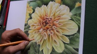 drawing a yellow dahlia blossom with colored pencils
