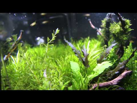 zetlight lancia on a 80x40x40 planted tank youtube. Black Bedroom Furniture Sets. Home Design Ideas