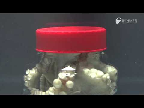 Octopus Escapes Jar