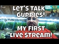 Let's Hang out and talk about guppies!