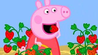 Peppa Pig Full Episodes | Season 8 | Compilation 47 | Kids Video