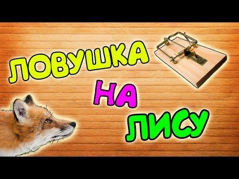Как поймать лису в домашних условиях видео