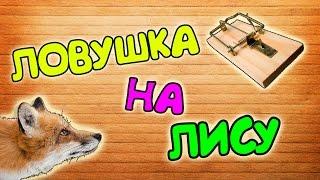 ЛОВУШКА НА ЛИСУ ЗА 5 МИНУТ !!!