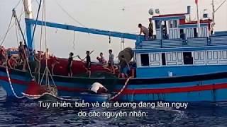 Viet Nam's work to address marine plastic pollution