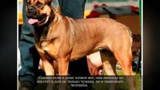 Ка де БО Средние породы собак