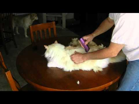 How To Shave Your Cat